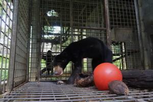 Petung avant (seul dans une cage de 4 m2)
