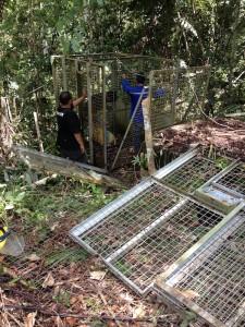 02-dismantling-old-cages