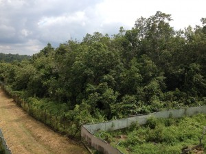 Forêt du premier enclos de 2 Ha