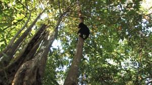 Bunbun explore la forêt