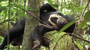 Bunbun en paix dans la forêt