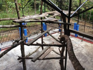 Nouvelle cage avec aménagements