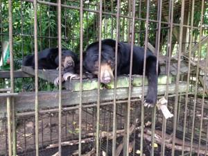Fitri et Rina dans leur ancienne cage