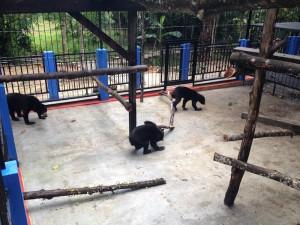 Brutus, Fitri et Rina dans la nouvelle cage
