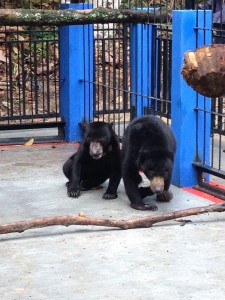Brutus et Fitri dans la nouvelle cage