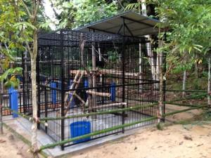 Nouvelle cage de Brutus