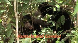 Kumala et Gendut dans l'Enclos C
