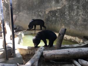WRC - nouvelle piscine pour les ours