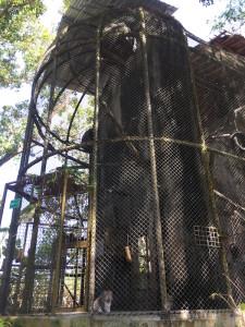 WRC - nouvelle cage pour les macaques